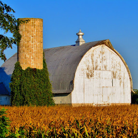 Harvest Time by Howard Sharper - Buildings & Architecture Other Exteriors ( agriculture, harvest, sunrise, rural, barns )