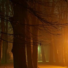 The way of Dreams by Siniša Almaši - City,  Street & Park  City Parks ( red, park, nature, tree, color, path, way, night, city,  )