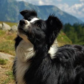 by Sara Verdini - Animals - Dogs Portraits