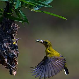 its time ! by Yadi Setiadi - Animals Birds ( bird, nest, feeding, wildlife, kids )