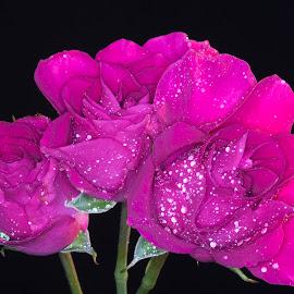 by Jerry Hoffman - Flowers Flower Arangements (  )