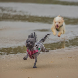 The Chase in on! by Brent Morris - Animals - Dogs Running