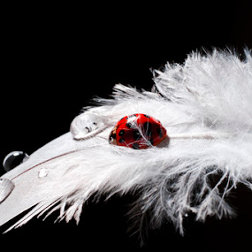 My ladybug by Ivan Vukelic - Digital Art Things ( ivo vuk vukelic ladybug feather bird wing fly red white )
