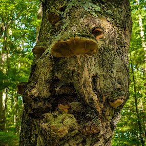 Face in Tree by Chris Mowers - Nature Up Close Trees & Bushes ( michigan, face, tree, big rapids, manistee national forest )