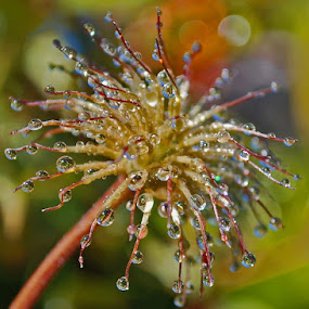 Bad hair day by Dasha Herman - Abstract Water Drops & Splashes