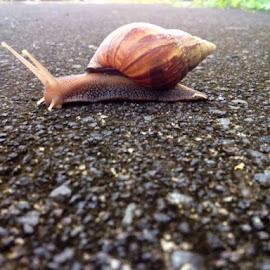Snail's eye view by Karen Boston  - Animals Amphibians