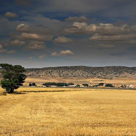 Travel by Gil Reis - Landscapes Prairies, Meadows & Fields ( nature, travel, places, spain, fields )