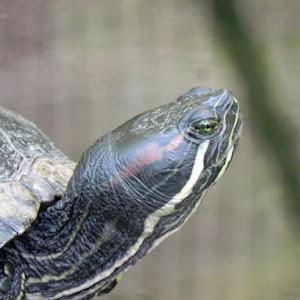 19 7334 turtle.jpg
