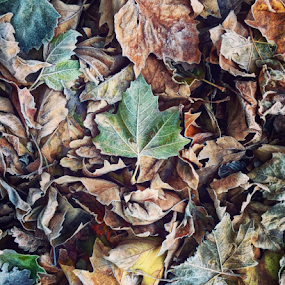 Autumn Leaves  by Benjamin Arthur - Instagram & Mobile iPhone