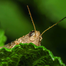 Hide and Sick! by Lidy Kerr - Animals Insects & Spiders