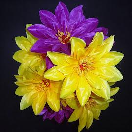 by Vpsamy Vpsamy - Flowers Flower Buds