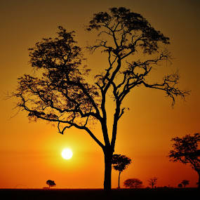 Itapura SP Brazil  by Marcello Toldi - Landscapes Sunsets & Sunrises