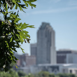 City in The Distance by Thomas Shaw - City,  Street & Park  Skylines ( skyline, distance, sky, tree, skyscrapers, oak, buildings, cityscape, city of oaks, raleigh, city, north carolina )