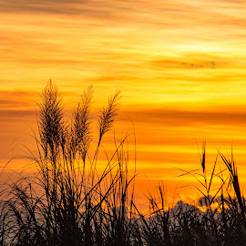 Grounded Feathers by Ynon Francisco - Nature Up Close Leaves & Grasses ( clouds, sky, silhouette, sunset, plants, weeds, sunrise, goldenhour )