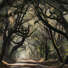 Carolina Canopy Road-2.jpg