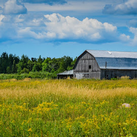 by Kathryn Potempski - Landscapes Prairies, Meadows & Fields ( colour, michigan, trees, forest, view, seascape, travel, landscape )