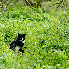 Peek a boo by Stephen Crawford - Animals - Cats Playing ( cat, black and white, grass, hiding, hidden, play,  )