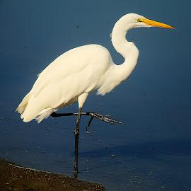 Figée dans l'attente by Gérard CHATENET - Animals Birds