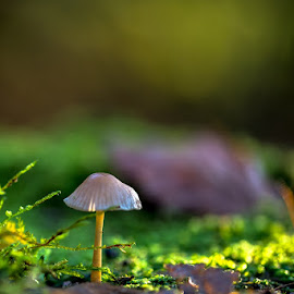 Mushroom by Joško Šimic - Nature Up Close Mushrooms & Fungi