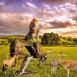 MEtting by Jaysinh Parmar - Digital Art Animals