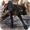 3D Cat Simulator Game For
