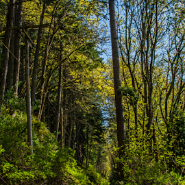 Small World by James Martinez - Nature Up Close Trees & Bushes ( washington, trail, trees, forest )