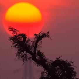 Egg yolk  by Abdus Alim - Landscapes Sunsets & Sunrises