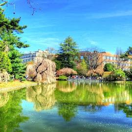 Spring, Brooklyn Botanical Gardens by Joseph Tague - City,  Street & Park  City Parks ( city scene, park, parks, gardens, new york city, cityscape, city park, spring, springtime, garden, brooklyn, city )