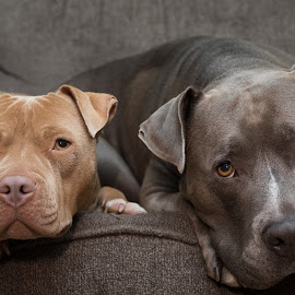 by Casey Bebernes - Animals - Dogs Portraits