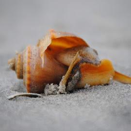 by Julane Vitarelli - Nature Up Close Sand ( sea creatures, underwater life, ocean life )
