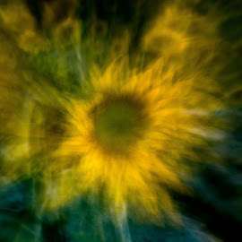 The Sun in the Flower by Craig Turner - Abstract Macro ( dixon, close up, hwy 80, sunflowers, ca )