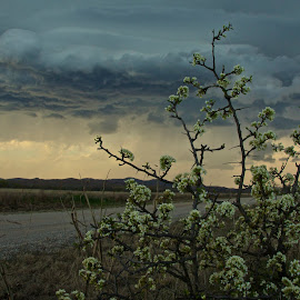 Oklahoma Spring Storm Season by Kathy Suttles - Digital Art Places