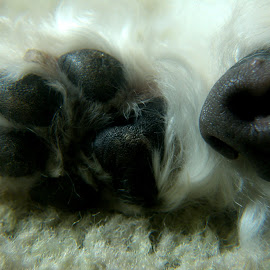Black paw and nose by Cristiane Ouricchio - Animals Other (  )