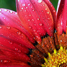 by Soumitra Haldar - Nature Up Close Flowers - 2011-2013