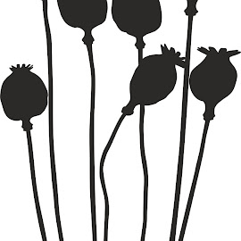 Poppy head by Vladimir Ceresnak - Illustration Flowers & Nature ( isolated, capsule, agriculture, poppy, nutrition, nature, narcotic, food, pods, grow, poppies, harvest, group, head, medicine, natural, garden, black )