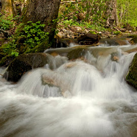 by Siniša Almaši - Nature Up Close Water ( water, up close, forest, spring, depth, colours, nature, cascade, trees, view, stones, rocks, light, river )