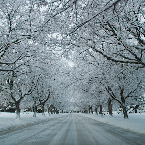 Snow row 2 by Kyley Hansen - City,  Street & Park  Street Scenes ( winter, cold, tree row, death, snow, street, cemetery, white, trees, road, graveyard, Tree, Nature, Sky,  )