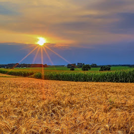 Golden Wheat Sunset by Monica Hall - Landscapes Prairies, Meadows & Fields