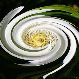 Cherokee Rose Swirl by Dave Walters - Digital Art Abstract ( abstract, art, digital art, swirle, flower,  )