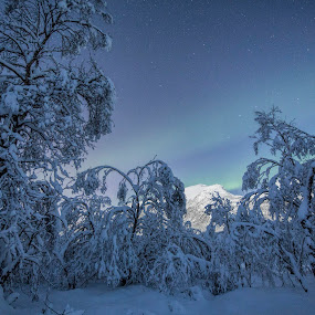 Snowfrozen trees by Benny Høynes - Landscapes Forests ( canon, auroras, snow, trees, norway )