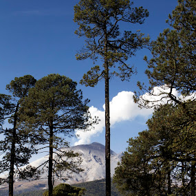 Volcano behind the trees by Cristobal Garciaferro Rubio - Nature Up Close Trees & Bushes ( volcano, popo, mexico, snowy volcano, popocatepet, smoking volcano, smoke )