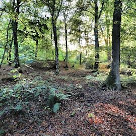 by Justus Böttcher - Landscapes Forests