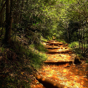 Up the Path by Domenic Gorin - Landscapes Forests