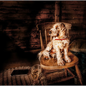 by Stephen Hooton - Animals - Dogs Portraits