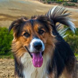My Little King by Sara Verdini - Animals - Dogs Portraits