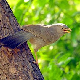 Bird by Asif Bora - Animals Birds