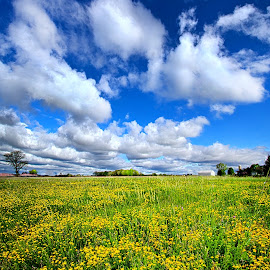 A Bright, Bright Sunshiny Day by Phil Koch - Landscapes Prairies, Meadows & Fields ( vertical, farmland, yellow, leaves, love, sky, tree, nature, weather, perspective, light, orange, twilight, art, agriculture, horizon, portrait, environment, dawn, season, serene, trees, lines, inspirational, wisconsin, natural light, ray, beauty, landscape, phil koch, spring, sun, photography, farm, life, horizons, inspired, clouds, office, park, beautiful, scenic, morning, shadows, field, red, blue, sunset, amber, peace, meadow, summer, beam, sunrise, earth, garden )