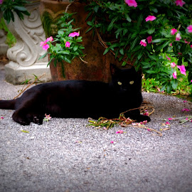 Kitty posing by flower pot by Brenda Shoemake - Animals - Cats Portraits (  )
