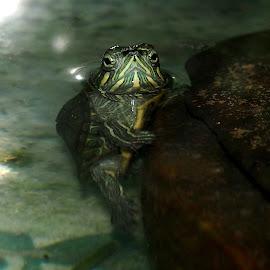narcissistic by Dedi Sukardi - Animals Amphibians