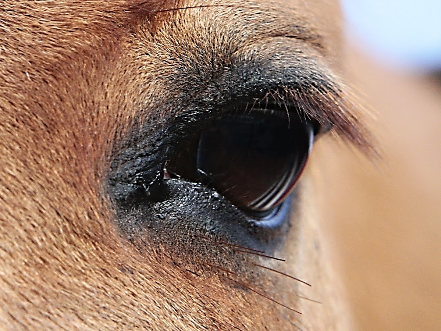 Trust by Ron Meyers - Animals Horses ( horses,  )